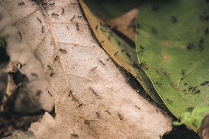 mieren-bestrijden
